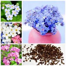 100pcs set FORGET ME NOT FLOWER SEEDS MIXED COLORS 100 FRESH SEEDS FREE SHIPPING