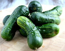Cucumber, NATIONAL PICKLING,50 Heirloom, Non-gmo,GLUTEN FREE Seeds FREE SHIPPING
