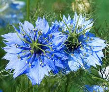 Love In A Mist Jewels Mix Nigella Damascena - 5,000 Bulk Seeds