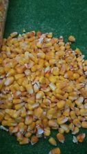 Maize Corn Particles 2KG Dried French Quality Corn For Fishing - Carp Spod Bait
