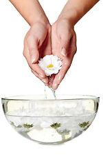 Larch Multi-Potency Bach Flower Essence Remedy 15 ml -Confidence & Determination