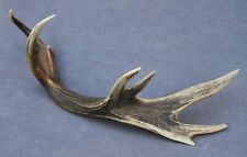 NATURALLY SHED WILD RED DEER ANTLER (HORN, KNIFE, CARVING, CHEW, TAXIDERMY)