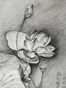 Original art work drawing art pencil sketch flower lotus