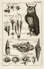Antique Print-HORNED OWL-SEASHELL-BRYUM-BUBO-Buys-1770