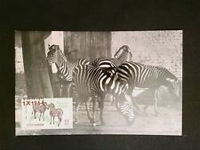 ROMANIA MK 1964 TIERE ZEBRA ZOO MAXIMUMKARTE CARTE MAXIMUM CARD MC CM c8254