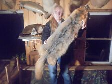 "43""#B Xx-Wide Adirondack Mt Monster Fancy Gray Fox Pelt/Taxidermy/Fur/Coyote /Fox"