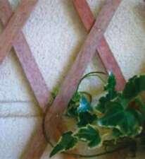 Traliccio estensibile in legno verniciato 3 x 1 Mt. Papillon