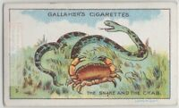 The Snake and the Crab  Aesop's Fable Moral Story 1920s  Ad Trade Card