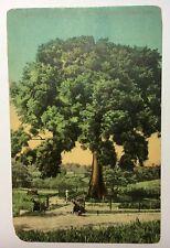 Santiago De Cuba Arbol de la Paz Peace Tree Vintage Postcard OLD Color Havana