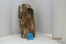 Unique Forest Product, Hollow Log for decoration/terrarium and crafts, #197