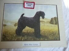 More details for kerry blue terrier  dog print mounted for framing