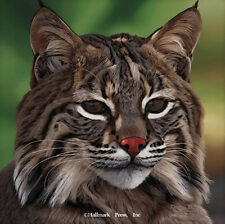 Eyes of North America Bobcat by Danny Day