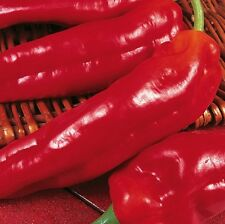Pepper Sweet - Long Red Marconi - 50 Seeds