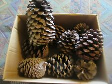 9 Number Large Fir Cones - Christmas Decorations/ Floral Crafts