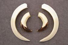 Real wild boar tusks (teeth, taxidermy, antlers, deer skull, handcraft, jewelry)