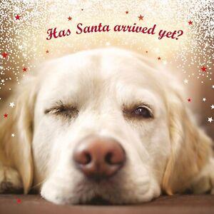 CHARITY Christmas Cards Yellow Labrador Festive Scene Pack 10  Dog Xmas Cards