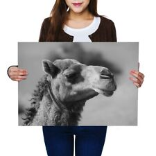 A2 - Amazing Happy Camel Animals Desert Poster 59.4X42cm280gsm(bw) #41431