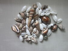 100gr Shell Spiral Mixed Style Home Decorations  Gift Party Sale Bargain