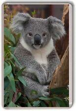Koala Bear Fridge Magnet 01