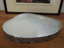 Large Clam Trinket/ Storage Box (Genuine Shell) 25 cm