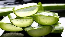 Just pure Oganic Aloe Vera a healing cooling and smoothing gel from head to toes