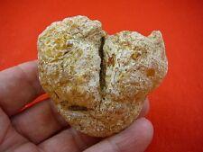 (k-2641) 70 G selten Emission Baum Gum Copal young Amber Neuseeland Tane Mahuta