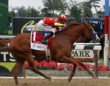 JUSTIFY 2018 BELMONT STAKES 8X10 GLOSSY PHOTO PICTURE TRIPLE CROWN
