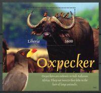 Liberia 2018 MNH Oxpecker African Buffalo 1v S/S Wild Animals Birds Stamps