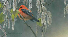 Robert Bateman SCARLET TANAGER & ALDER BLOSSOMS Limited Edition Print