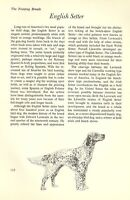 "The English Setter - Vintage Dog Art Print - Matted ""G"""
