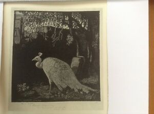 1930s Woodcut print The Peacock by Lionel Lindsay