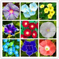 50 PCS Seeds Morning Glory Flowers Perennial Garden Bonsai Plants Home NEW 2018