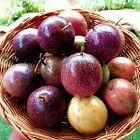 100 seeds Purple Passion fruit Sweet Beauty Flower Organic Passiflora Edulis