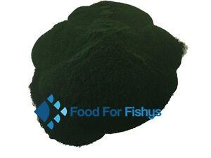 US Grown Spirulina Powder Feed Fry Fish Brine Shrimp Goldfish Aquarium Coral