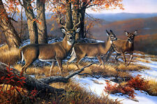 "Oil Painting HD Print Picture Animals Deer in the forest on canvas 16""x24"" L352"