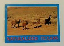 "Vintage ""Naturalized Texans"" Used Postcard"