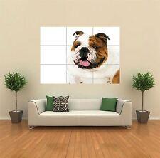 Westminster Bulldog Perro Nuevo Poster Gigante De Pared Art Print imagen x1431