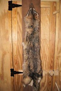 Beautiful Garment Tanned Virginia Coyote Fur Pelt