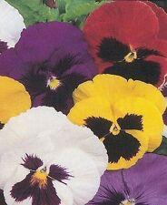 Full Sun Cold Climate Plants, Seeds & Bulbs