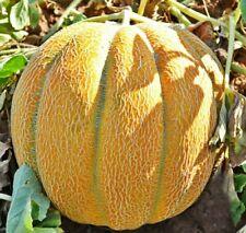Seeds Melon Ethiopian Super Sweet Rare Fruit NON GMO Organic Heirloom
