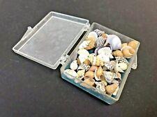 Box of Sea Shells, 59 miniature shells in a clear plastic box, GeoCentral