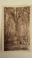 CPA SAINT-VAAST-LA-HOUGUE - grand arbre dans le bois du RABEY