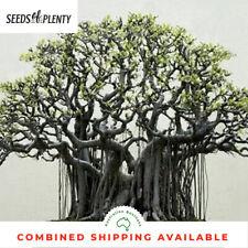 Bodhi Tree - Ficus religiosa (1000 Bonsai Seeds)