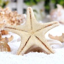 10pc Natural Starfish Sea Star shell Aquarium Landscape DIY Craft Home Decor NEW