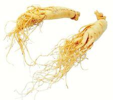 Ginseng - PANAX GINSENG - 7 Semillas - Planta Medicinal - Jardin Garden Samen