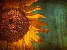 ART PRINT POSTER PAINTING DRAWING DESIGN FLOWER SUNFLOWER GRUNGY LFMP0624