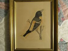 Antique Vintage Framed Bird Drawing of a Baltimore Oriole