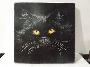 """SPRINGBOK MIDNIGHT MAGIC Black Cat☆ Puzzle 500 + Pieces☆20""""x20""""☆Complete"""