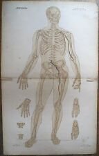 Lithographie, Ostéologie syndesmologie antérieur, Bourgery et Jacob, v. 1840