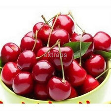 20pcs Practical Cherry Seeds Balcony Potted Fruit Organic Seeds in the Garden CA